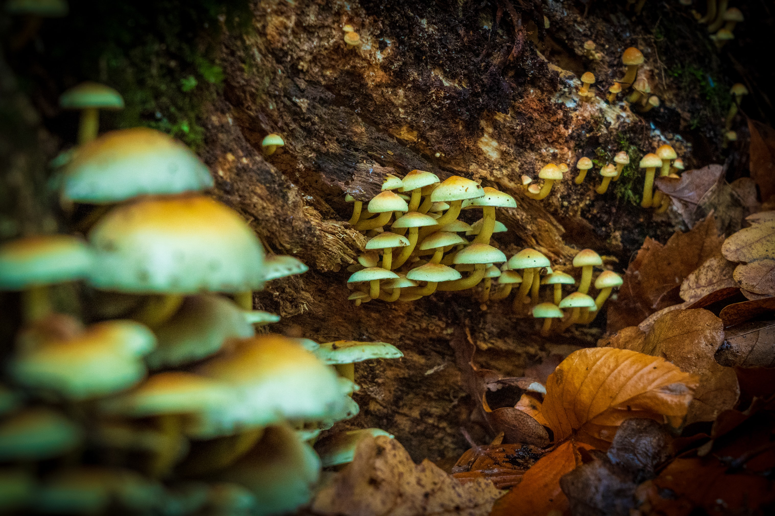Magic Mushrooms Growing in Forest